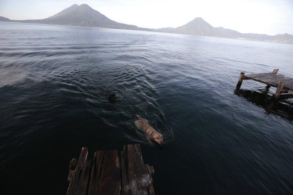 Un perro nada en el lago de Atitlan por la mañana, en la región de...