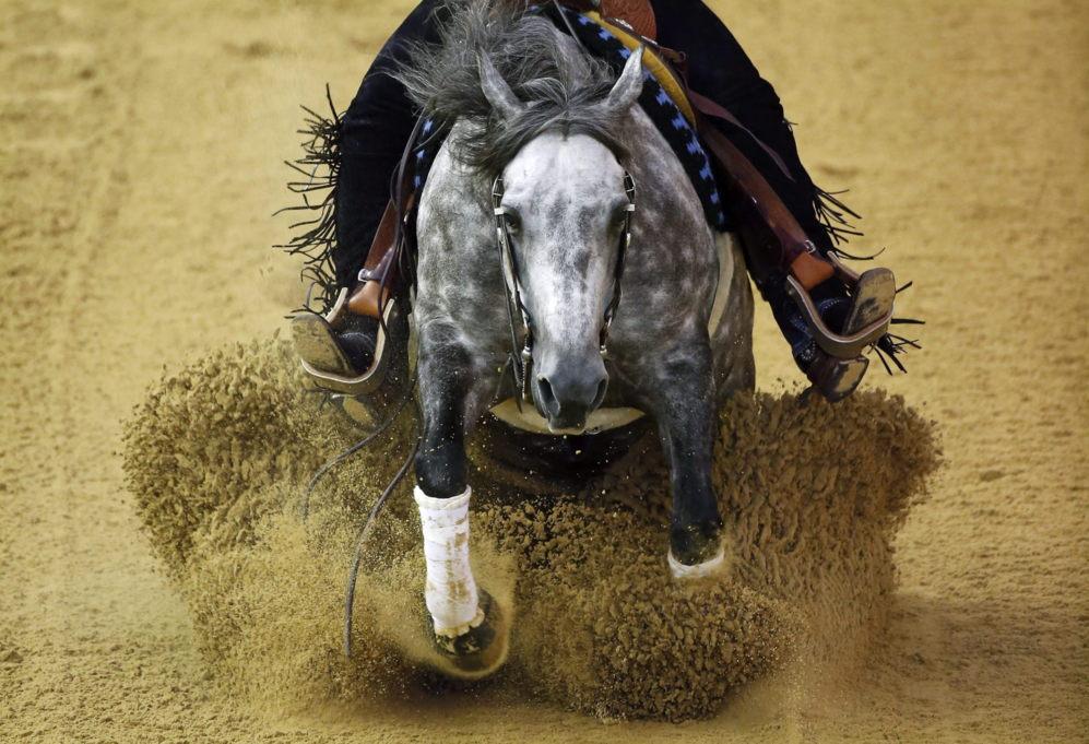 """El caballo australiano """"La Biglia Sailor', perteneciente a Corinna..."""