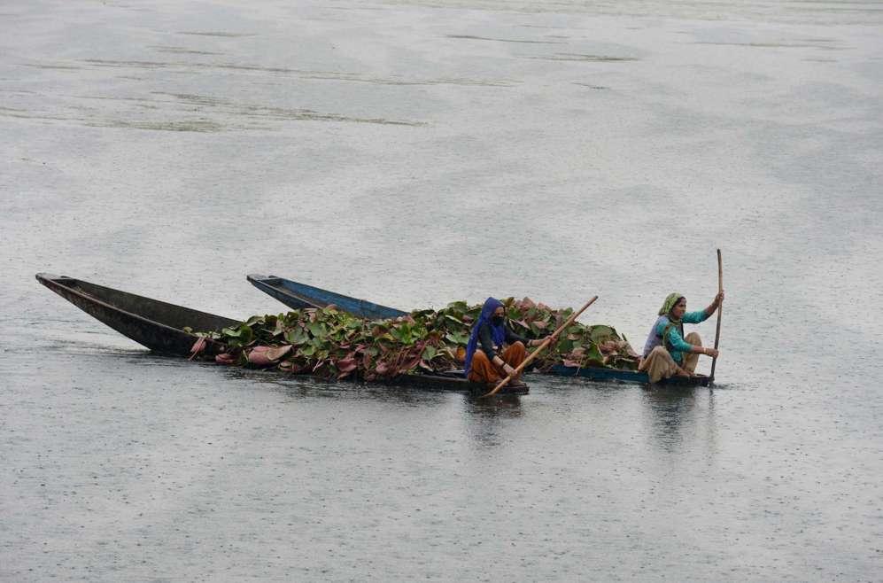 Mujeres de Cachemira reman en barcos cargados de raíces de loto para...