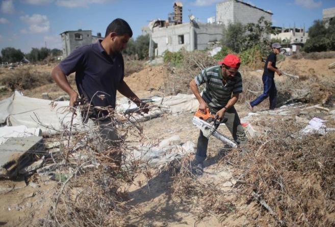 Campesinos palestinos limpian sus tierras, dañadas por el paso del...