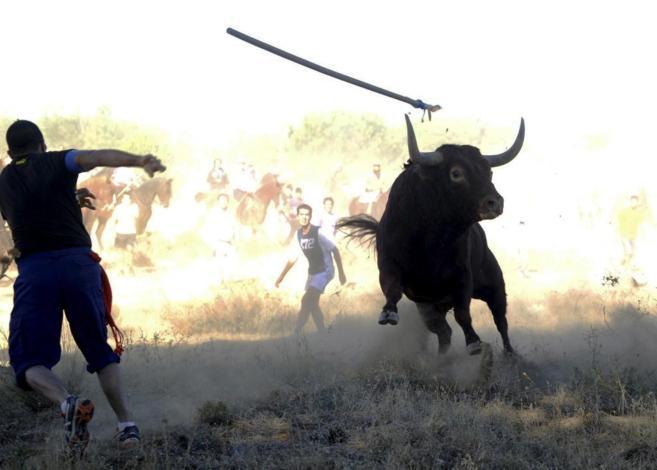 Un joven alancea al toro en 2013.