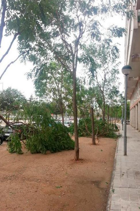 Varios árboles caídos en la localidad de Balàfia, Lleida.
