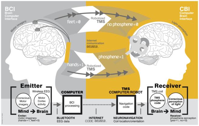 Así se dijeron 'hola' dos cerebros a 7.000 kilómetros de distancia