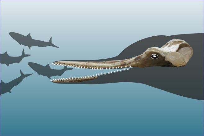 Recreación del cráneo y parte de la mandíbula del nuevo...