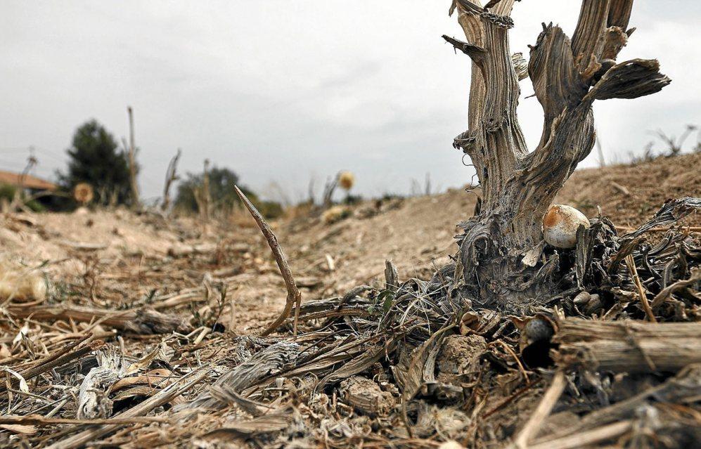 Terrenos afectados por la sequía en el término municipal de...
