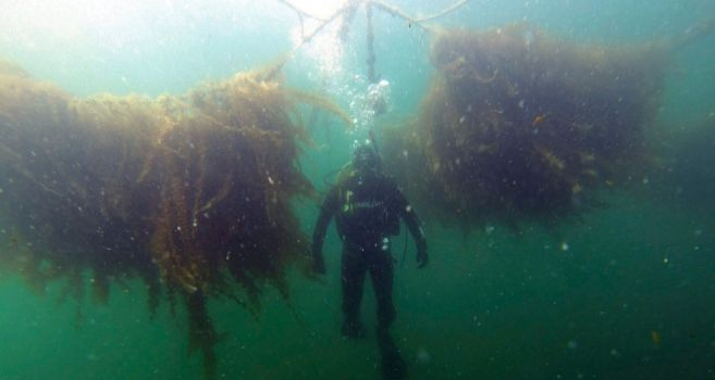 Proyecto europeo de cultivo de algas a gran escala  proyecto ATxSEA.