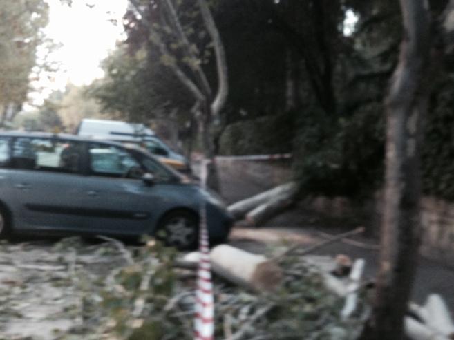 Los daños ocasionados por la caída de una rama en Mirasierra.