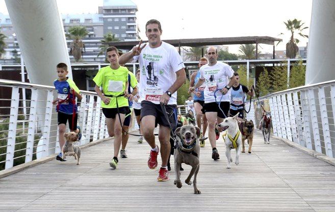 Imagen de la can-rrera disputada este domingo en Bioparc Valencia.