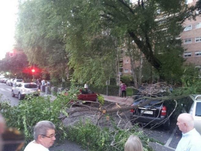 Imagen del árbol caído en Alcorcón