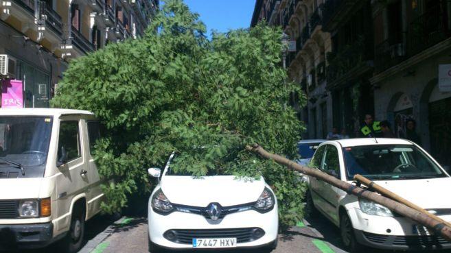 El árbol caído sobre un vehículo en la calle Conde de Romanones.