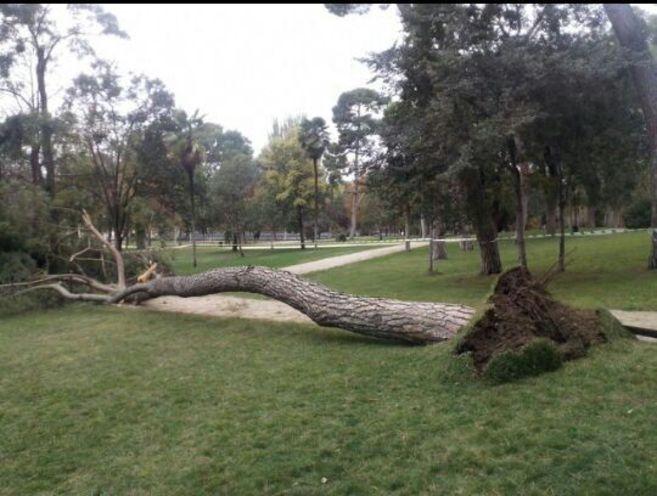 Uno de los árboles caídos este fin de semana en El Retiro.