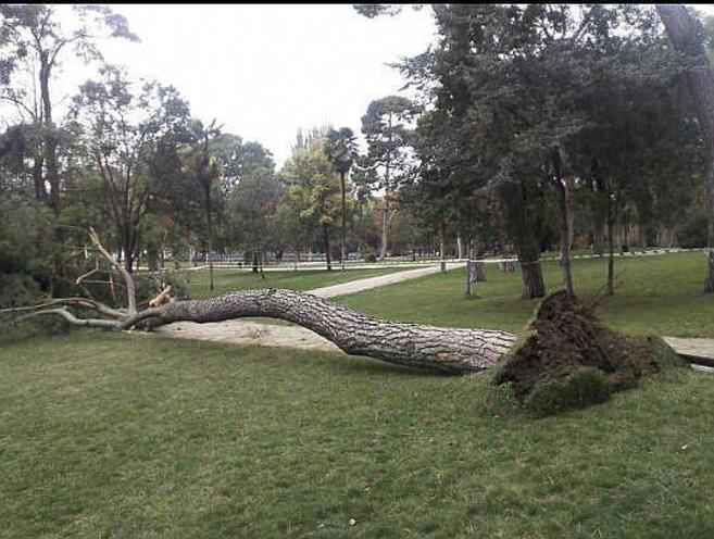 Imagen del árbol caído hoy en El Retiro