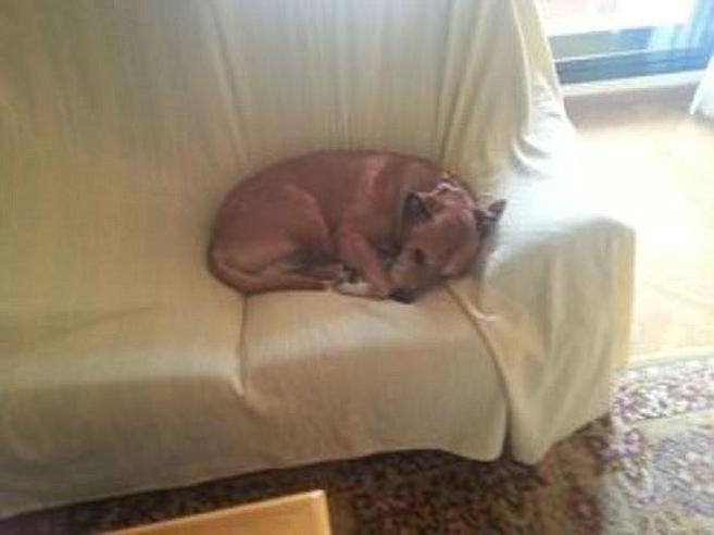 Excálibur, el perro de Javier Limón y Teresa Romero que fue...