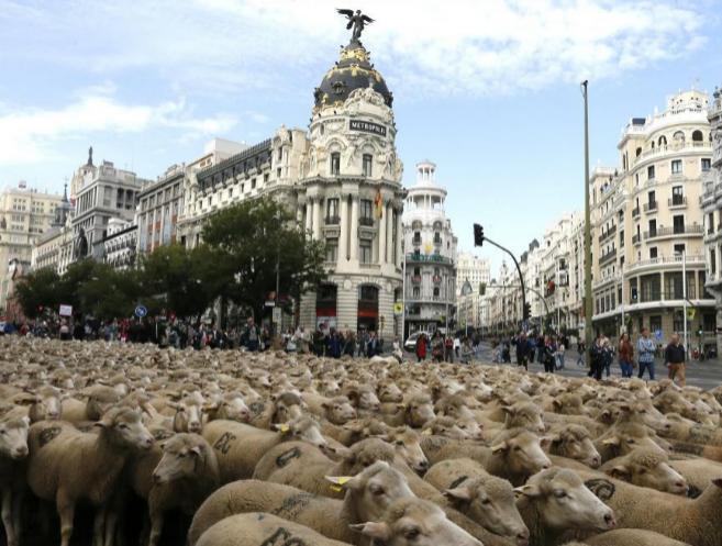 Las dos mil ovejas a su paso por la Puerta de Alcalá en Madrid, con...