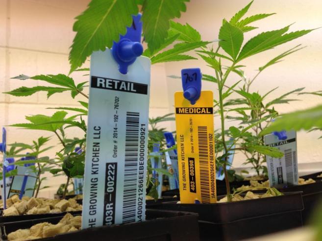 Plantas de marihuana a la venta en un comercio de Lafayette, en...