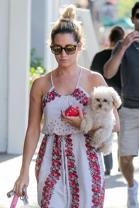 Maui, la mascota de Ashley Tisdale, acompaña a su dueña incluso a...