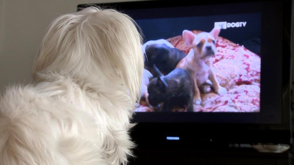 Un perro disfruta de la programación del canal.