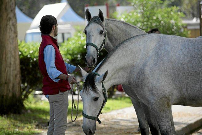 Dos caballos de los que participarán a partir de este martes en el...