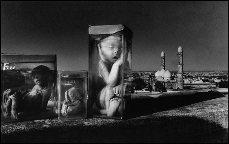 Los fetos que fueron abortados durante el escape de gas fueron...