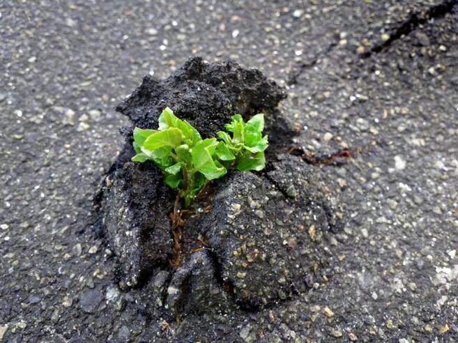 La resiliencia es la capacidad de las ciudades de superar las...