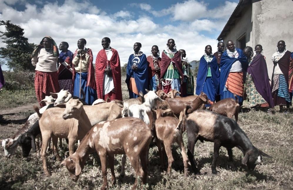 Proyecto de Trip-drop para conseguir cabras para una tribu en...