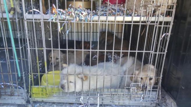 Cachorros, en una jaula durante su transporte en una furgoneta.