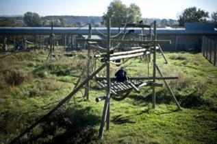Primates en un centro de recuperación.