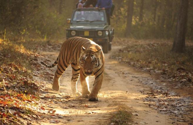 Reserva de Tigres de Kanha (India).