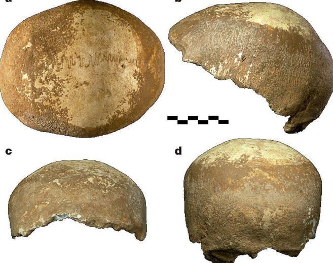 Restos del cráneo hallado en Manot Cave, con una antigüedad de...