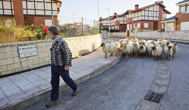 Un pastor lleva su  rebaño de ovejas por el interor del barrio de La...