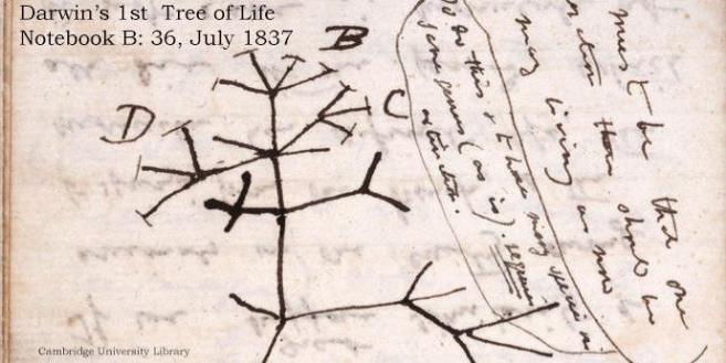 Primer árbol de la vida de Darwin.