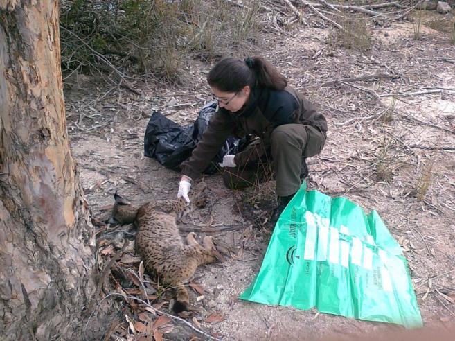 Una agente medioambiental realiza el levantamiento de un cadáver de...