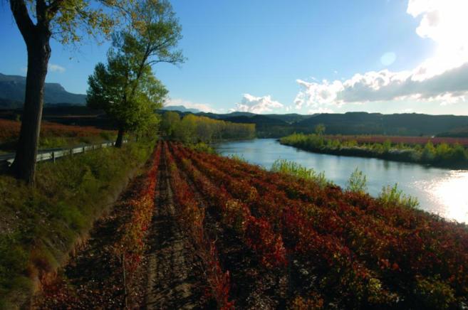 Paisaje de la Rioja Alavesa. Viñedos que bordean el curso del río...