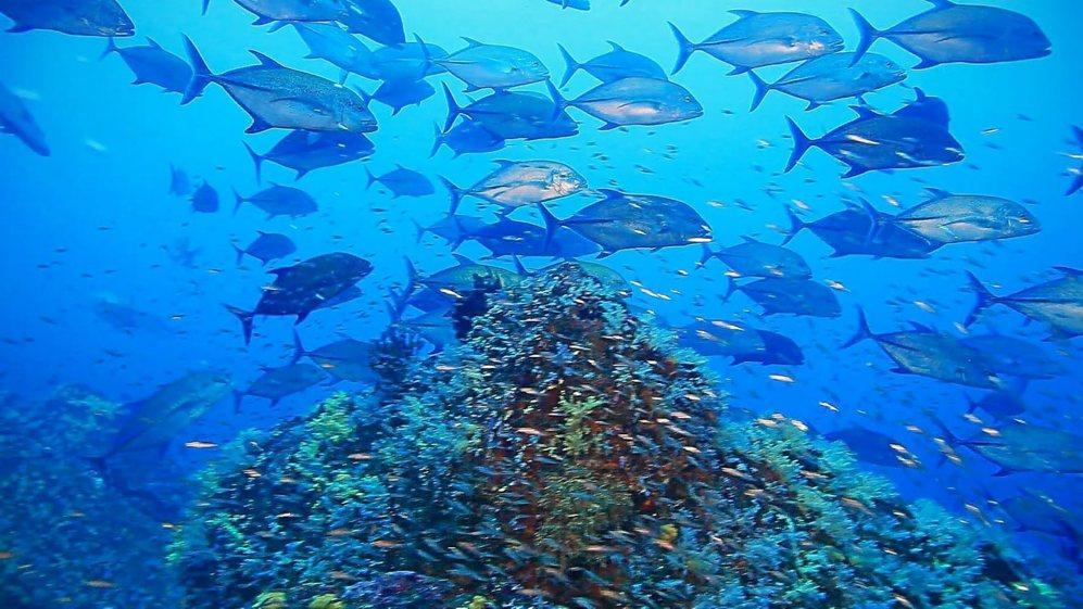 Fotograma del documental 'Arrecifes. Oasis de vida'.