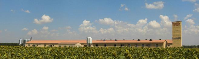 Una granja experimental en Segovia.