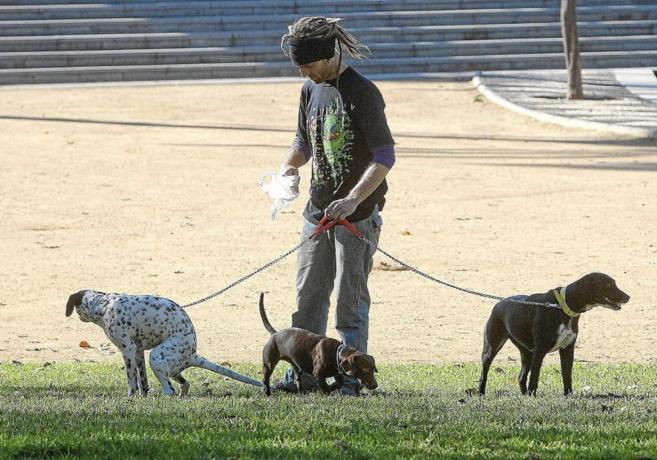 Un joven recoge los excrementos de sus perros.