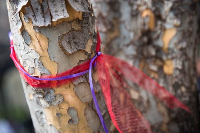 Un lazo violeta y rosa atado a un árbol para recordar a las niñas en...