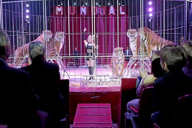 Los tigres de la domadora Carmen Zander, en plena actuación en el...