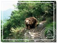Senda de los osos