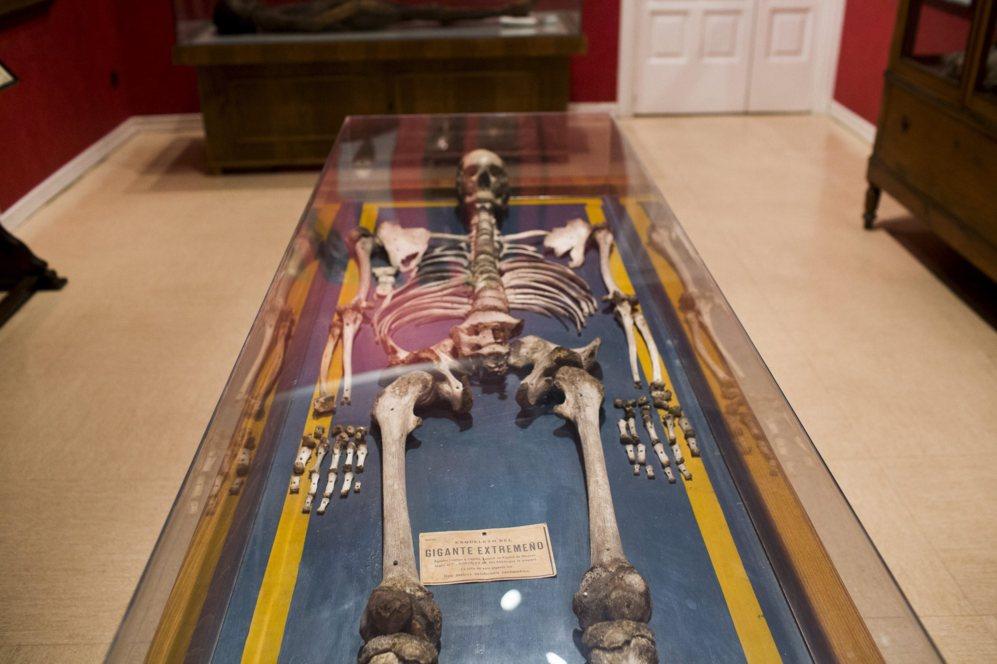 Esqueleto del gigante extremeño.