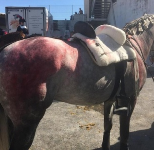 Estado en el que quedó uno de los caballos de Andy Cartagena