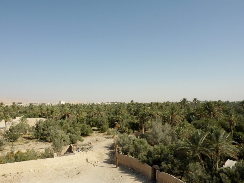 Un inmenso palmeral se extiende en los alrededores de las ruinas...