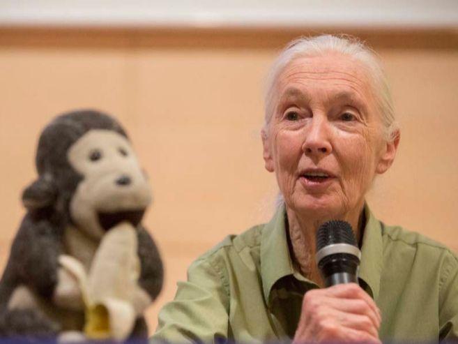 Jane Goodall acompañada de su pequeño chimpancé de peluche durante...