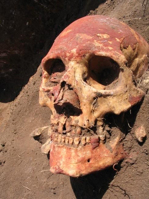 Cráneo de un individuo Yamna procedente de la región de Samara,...