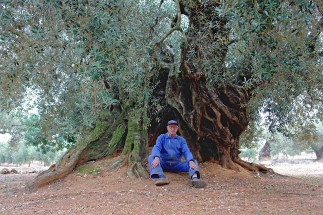 Vicente Capafons (82), propietario del olivo de la película, posa...