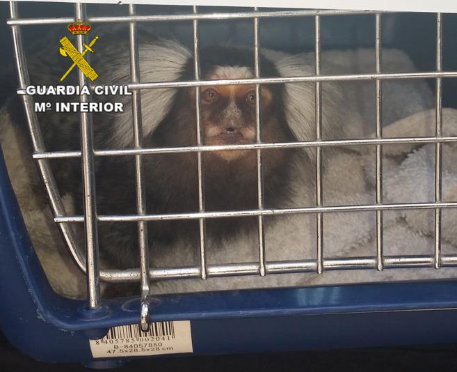El mono, ya dentro de la jaula.