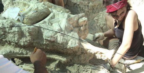Huesos del antílope y una jirafa gigante encontrados en el...