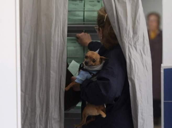 Una mujer selecciona las papeletas con su perro antes de votar en las...