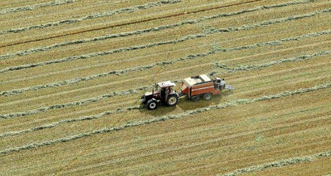 Imagen de un cultivo en Tierra de Campos (León)