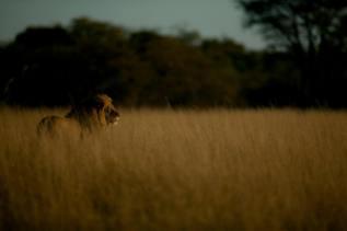 Una de las últimas fotografías de Cecil.